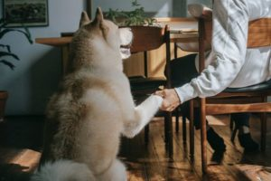 21.05.13_dog-shaking-hand-with-man.jpg