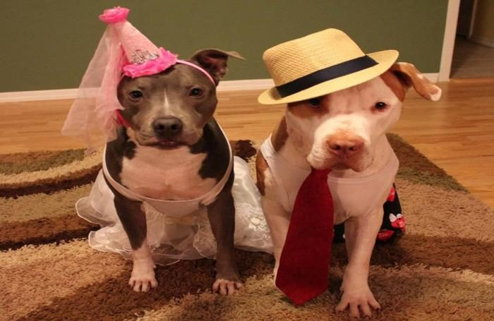 dogs-in-clothes.jpg