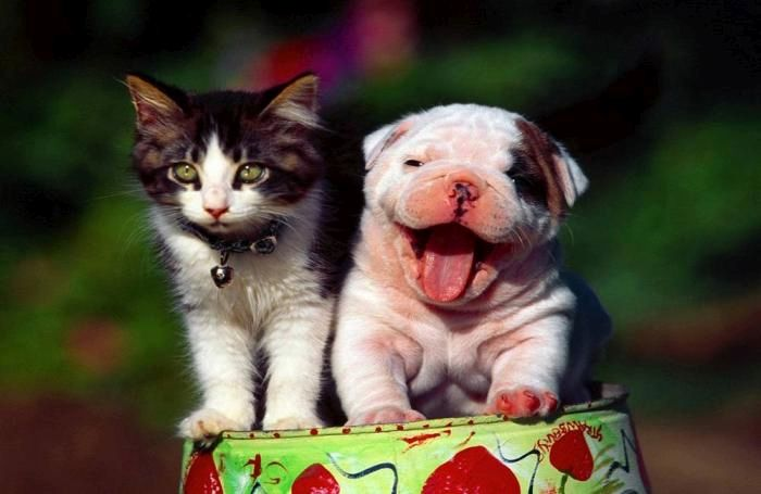 kitten-and-puppy.jpg
