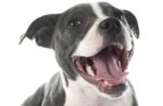 Pet-dental-health-1602PETdental.jpg