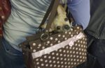 dog-in-purse.jpg