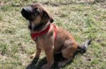dog-with-red-harness-sitting