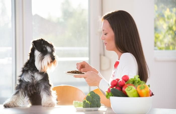 woman-feeding-dog-in-kitchen