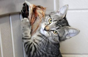 kitten-feather-toy