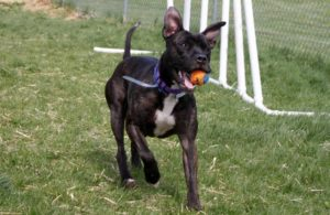 dog-running-with-ball-in-mouth