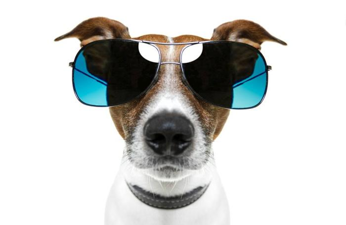 dog-with-big-sunglasses