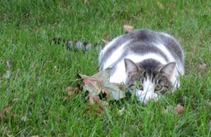 cat-outside-in-grass