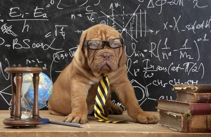 puppy-with-glasses-at-chalkboard