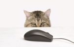 Cat-food-online