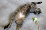 cat-playing-with-bird-toy