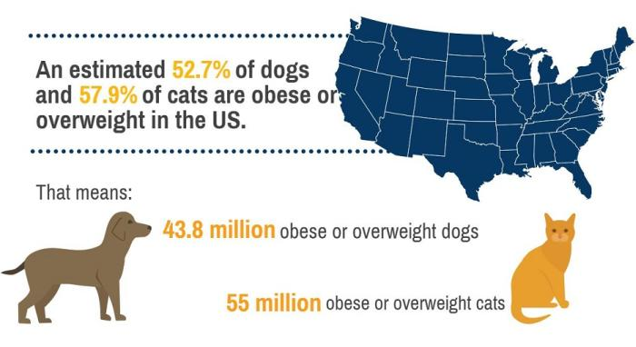 Top_5_obesity-related_diseases_in_cats_and_dogs_MAIN_ARTICLE_IMAGE