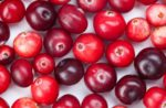 cranberries-on-background