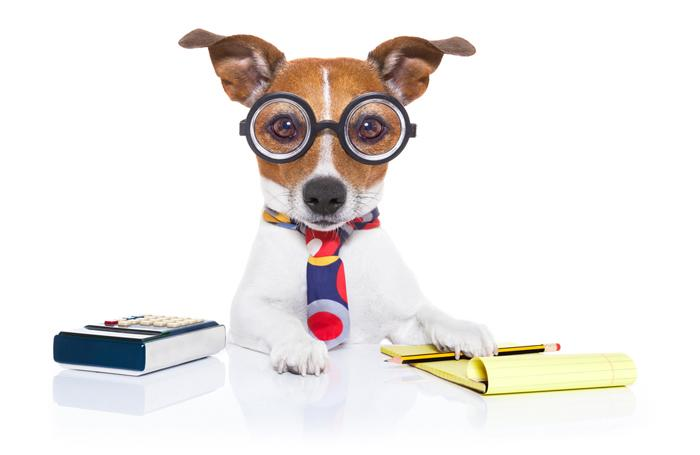 Dog-accountant