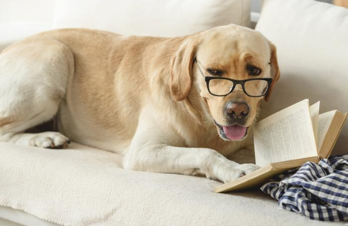 dog-reading-book