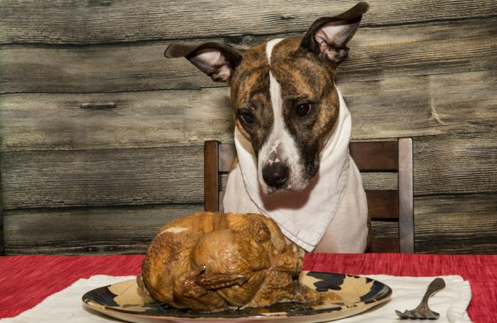 dog-thanksgiving-turkey