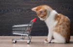 kitten-grocery-cart