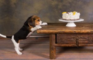 puppy-looking-at-cake