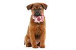 puppy-raw-meat