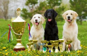 Dogs-trophies