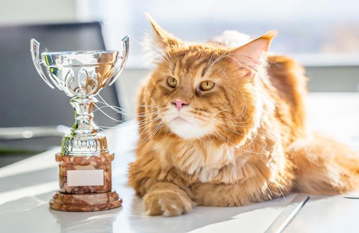Pet Enterprise acknowledged canine, cat meals and treats of 2017