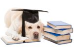 dog-books-research