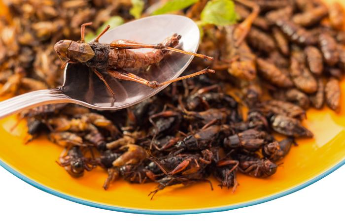 fried-insects-on-spoon