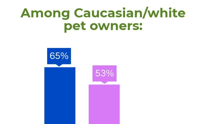 Infographic: Pet possession charges of 4 US ethnic teams