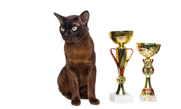 OOPOEH Basis wins Purina BetterwithPets Prize