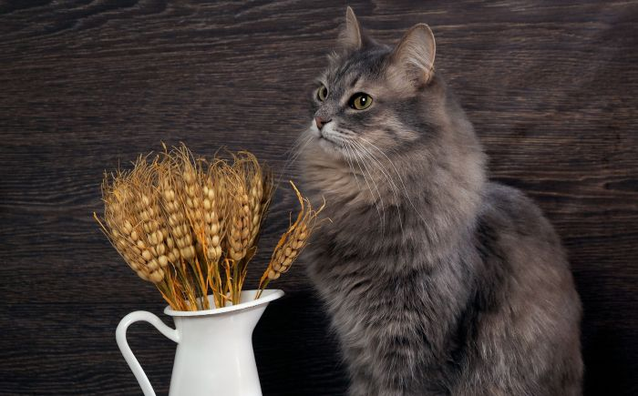Scientists examine how cats digest carbohydrates