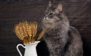 cat-wheat-grain.jpg