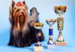 dog-award-trophy-Yorkshire-Terrier.jpg