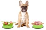 dog-vegetable-meat-food.jpg