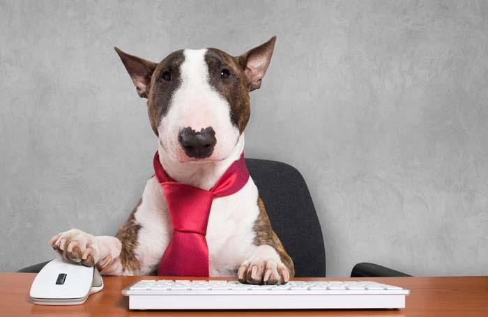 Business-dog-computer