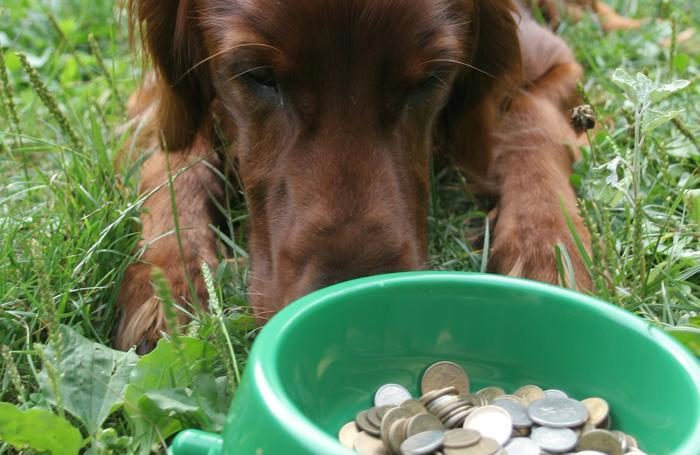 dog-bowl-money
