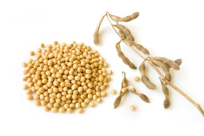 Soybean-on-white-background