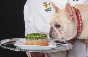 french-bulldog-eating-from-plate
