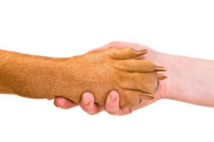 dog-paw-shaking-human-hand