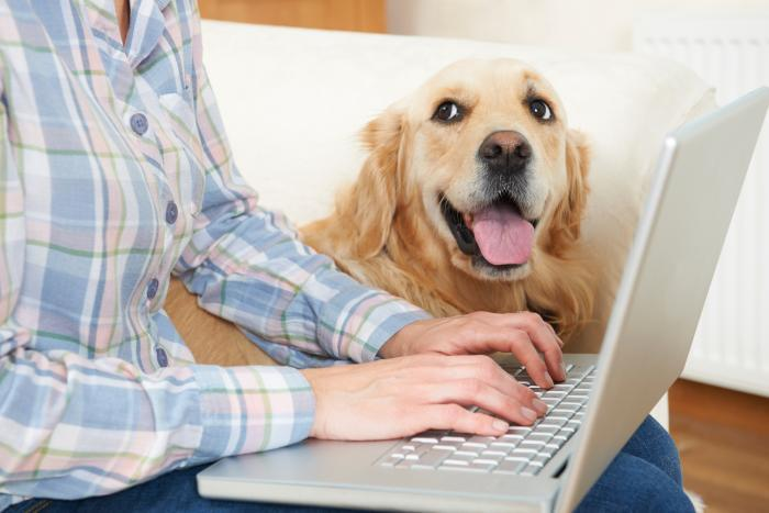 Dog with owner on computer