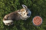 dog-outside-with-kibble
