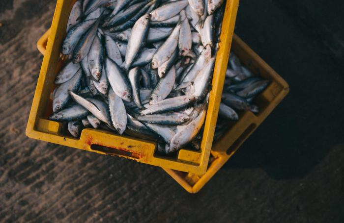Uk firm expands fish based pet food exports to china for Fish based dog food