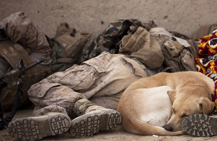 soldiers-dog-sleeping
