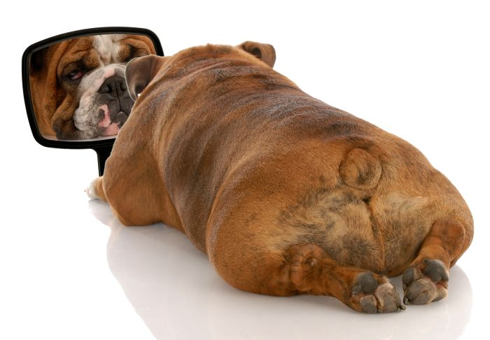 Bulldog-mirror-dog.jpg