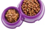 Dry-wet-pet-food