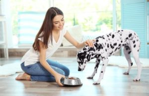 Female owner feeding a dalmation