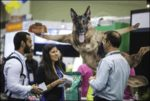 Global-pet-expo-2017