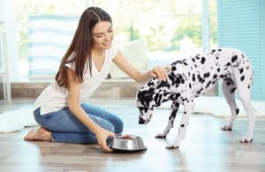 Human-pet-food-trends