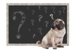 pug-with-question-marks-on-chalkboard