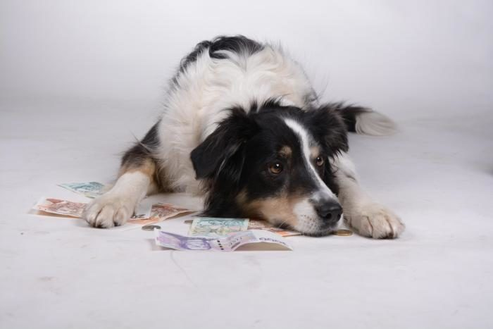 dog-money-international-cash-coins