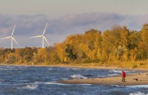 beach-wind-turbine-dog-sustainability.jpg