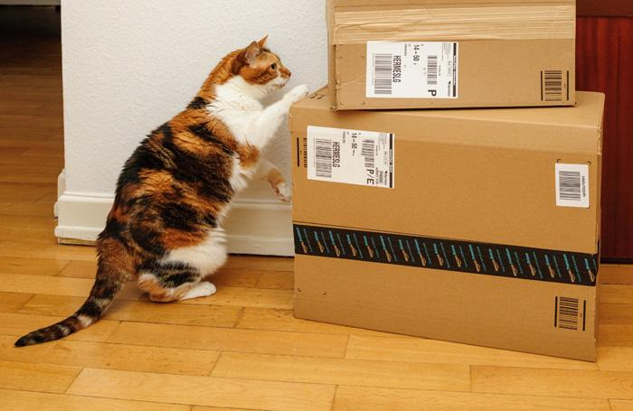 cat-looking-at-Amazon-boxes